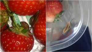 Sutton Guardian: 'I feel so sick!': Girl finds SLUGS in her strawberries from supermarket - after she starts eating them
